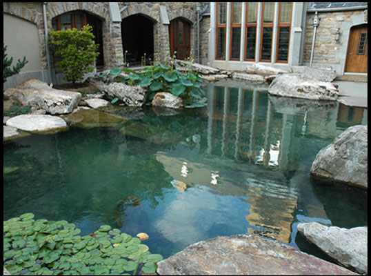 Water garden and koi pond for Koi pool water gardens thornton